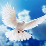 obituary dove